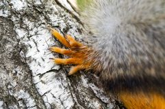 Нога белки в лесе Стоковое Фото