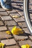 Нога в тапках на мосте осени педали велосипеда Стоковые Изображения RF