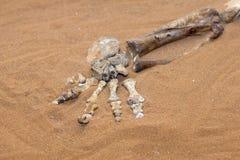нога динозавра Стоковая Фотография