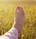 Нога женщины стоковые изображения