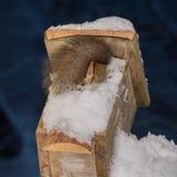 Нога зимы Стоковое фото RF