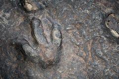 Нога динозавра Стоковые Фото