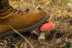Нога отжата пластинчатым грибом мухы Стоковая Фотография RF