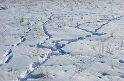 нога печатает снежок Стоковая Фотография RF