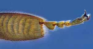 нога пчелы Стоковые Фото