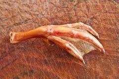 Нога утки Стоковое Изображение RF