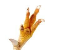 нога цыпленка пакостная Стоковые Фото