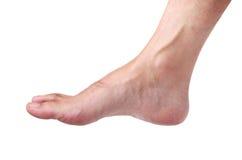 Нога Стоковая Фотография