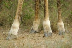 ноги довольно Стоковые Фото