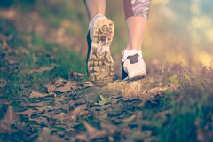 Ноги женщины в ботинках на пути леса на заходе солнца Стоковая Фотография