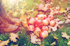Ноги женщины в ботинках с яблоками и листьями осени Стоковая Фотография RF