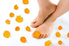 ноги женщины цветка Стоковое Фото