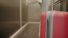 Ноги крупного плана дамы Туриста Entering лифт с чемоданом и сумкой перемещения акции видеоматериалы