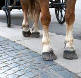 Ноги лошади с hoofs и подковы против колес c Стоковая Фотография RF