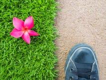 Ноги на поле между цветком на лужайке Стоковая Фотография RF
