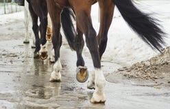 ноги лошади бежать на влажной дороге Стоковые Изображения