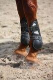 Ноги лошади каштана закрывают вверх с ботинками тутора Стоковое Изображение RF