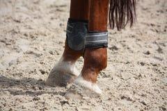 Ноги лошади каштана закрывают вверх с ботинками тутора Стоковые Фотографии RF