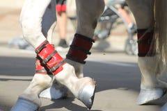 Ноги лошади Стоковое Фото