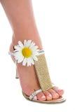 ноги пяток цветков высокие длиной Стоковые Фото