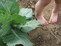 ноги ребенка капусты Стоковая Фотография RF