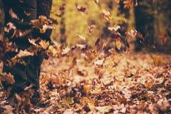 Ноги укомплектовывают личным составом идти внешний с листьями падения Стоковые Фотографии RF