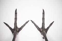 Ноги фазана Стоковые Изображения