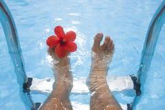 ноги цветка стоковые фотографии rf