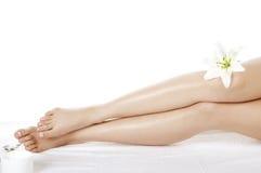 ноги цветка Стоковое Изображение RF