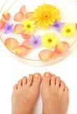ноги цветков Стоковое Фото