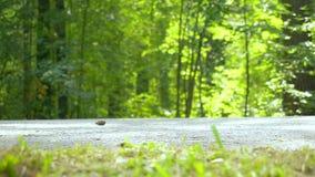 Ноги ` s людей в общественном месте прогулка парка Предпосылка bushes зеленый цвет акции видеоматериалы