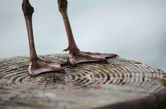 ноги webbed Стоковые Фотографии RF