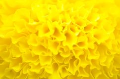 Ноготк завод в саде на лете под солнечным светом, типично с yellowl, предпосылка природы, абстрактные предпосылки, отборный фокус стоковая фотография rf
