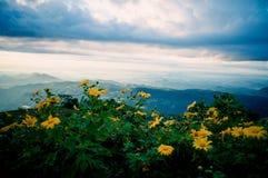 Ноготк, мексиканское tournesol, мексиканский солнцецвет Стоковое Изображение
