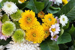 Ноготк, хризантема, Gerbera Стоковое Фото