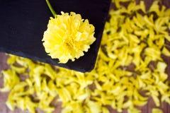 Ноготк цветка Стоковые Фотографии RF