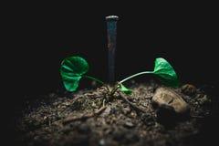 Ноготь в грязи Стоковое Изображение