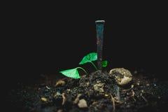 Ноготь в грязи стоковое фото