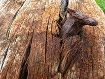 Ноготь и тухлая древесина Стоковые Фотографии RF