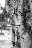 Ноготь на дереве стоковые изображения rf