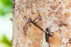 Ноготь на дереве стоковая фотография rf