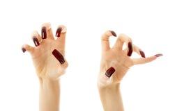 ногти агрессивныйых рук длинние Стоковые Фото
