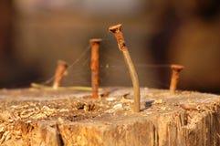 Ногти в пне Стоковое Изображение