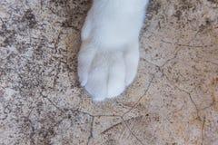 Ног-условие кота до конца белых пер Стоковые Фотографии RF