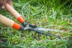 ножницы травы Стоковые Фотографии RF