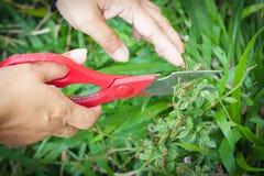 ножницы bush Стоковое Изображение RF