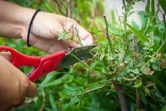 ножницы bush Стоковая Фотография RF