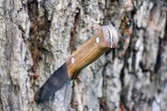 Нож с деревянной ручкой стоковые фотографии rf