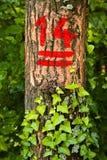 Номера на деревьях Стоковое Изображение