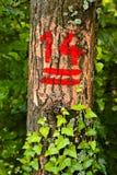 Номера на деревьях Стоковая Фотография RF